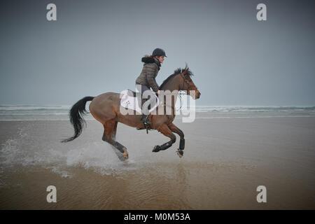 Un cheval femelle cavalier cheval de gauche à droite sur la marée basse sur une plage capturée avec un peu d'eau Banque D'Images