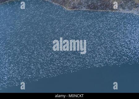 Vue aérienne d'oiseaux volant au-dessus du lac Banque D'Images