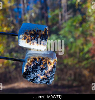 Deux des guimauves grillées sur un feu de camp dans la forêt Banque D'Images
