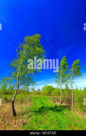 Vue panoramique sur les zones humides et les prairies de la Parc National de Biebrzanski par la rivière Biebrza Banque D'Images