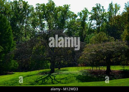 Paysage d'arbres verts luxuriants Banque D'Images