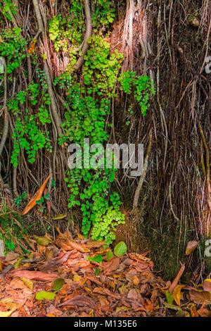Un mur d'une montagne avec une végétation humide et éclats de lumière du soleil et des feuilles sèches sur le sol Banque D'Images