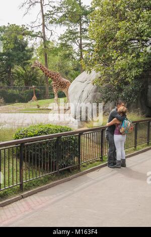 Jeune couple hugging dans un zoo dans la ville de Mexico. Banque D'Images