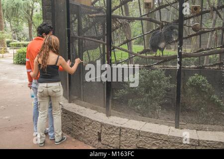 Un couple de jeunes amoureux bénéficiant d'une visite d'un zoo dans la ville de Mexico. Banque D'Images