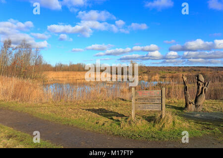 RSPB Dearne Valley Old Moor, Wetland Centre Réserver, Wombwell, Bolton sur Dearne, Barnsley, South Yorkshire, Angleterre, Royaume-Uni.
