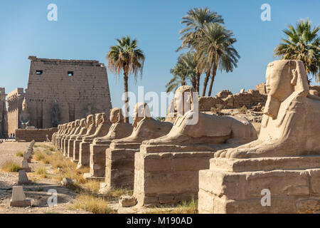 Le temple de Louxor, Louxor, Egypte Banque D'Images