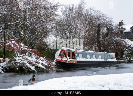 Bateau amarré sur l'Étroit Canal Grand Union dans le Port de Berkhamsted, Hertfordshire, Angleterre; Canard colvert Banque D'Images