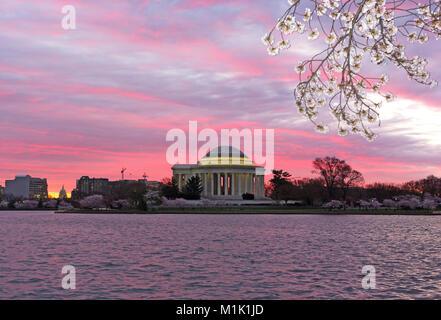 Panorama urbain avec Thomas Jefferson Memorial et Capitole au lever du soleil pendant la saison des cerisiers en fleur à Washington DC, USA. Paysage de printemps avec flou