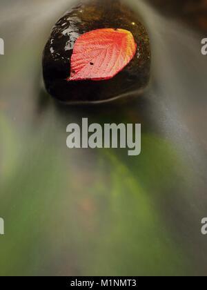 Feuille de framboise épineux pris sur la pierre humide. Les feuilles d'un piège dans le milieu d'un ruisseau de montagne.
