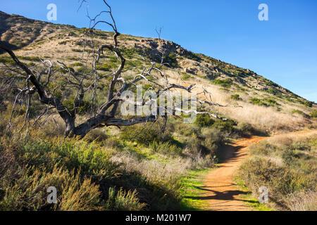 Arbre mort sur le sentier de randonnée sur la montagne de Bernardo à Poway San Diego County North à l'intérieur Banque D'Images