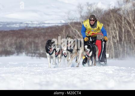 L'équipe de chiens de traîneau en Semashkin musher Kamchatka Andrey. Course de chiens de traîneau du Kamchatka La Banque D'Images