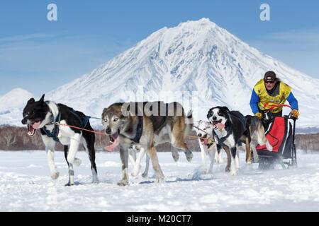L'exécution de l'équipe de chiens de traîneau sur Semashkin Kamchatka musher Andrey contexte de volcan. Course de Banque D'Images