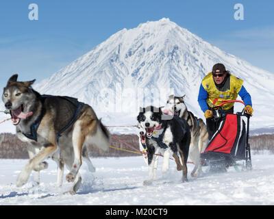 L'équipe de chiens de traîneau musher Kamchatka Andrey Semashkin sur fond de volcan. Course de chiens de traîneau Banque D'Images