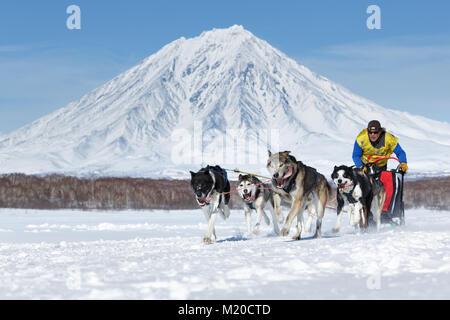 L'exécution de l'équipe de chiens de traîneau musher Kamchatka Semashkin Andrey sur fond de volcan. Course de chiens Banque D'Images