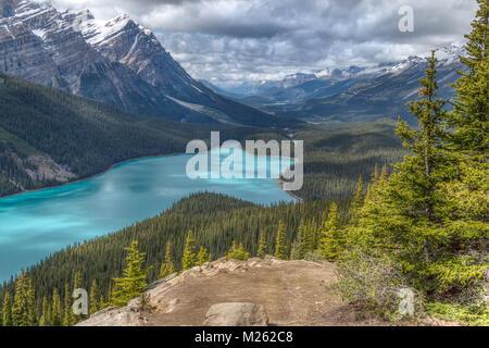 Le lac Peyto Banque D'Images