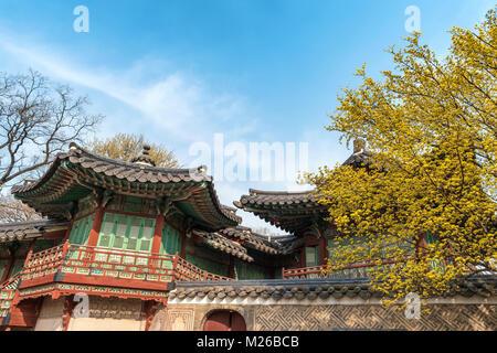 Au printemps, le Palais Changdeokgung Séoul, Corée du Sud Banque D'Images