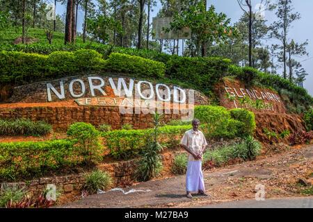 La plantation de thé de Norwood près de Hatton, au Sri Lanka, en Asie Banque D'Images