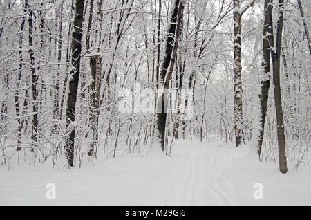 Parc Filevsky, Moscou, Russie après des chutes de neige. Arbres enneigés Banque D'Images