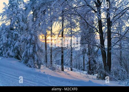 Montagnes hiver paysage. Vue panoramique sur le coucher du soleil dans la forêt, les arbres couverts de neige, la Banque D'Images