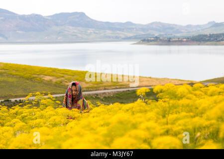 Jeune femme asiatique vêtu d'un tissu de la tête pour se protéger des piqûres de moustiques par le lac fleurs jaunes Banque D'Images