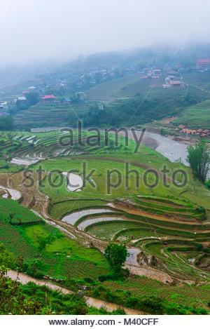 Les rizières en terrasses, de la vallée de Muong Hoa, près de Sapa, Vietnam du Nord. Banque D'Images