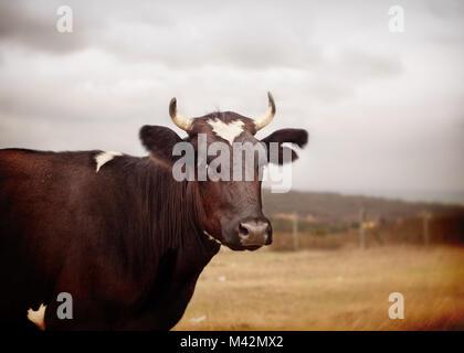 Vache avec forme de coeur Banque D'Images