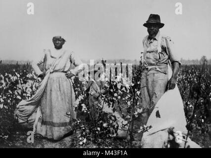African American métayers travailler un champ de coton dans le delta du Mississipi, ca. 1910. Banque D'Images