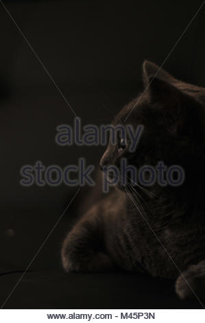 La chatte sur un canapé dans une lumière douce Banque D'Images