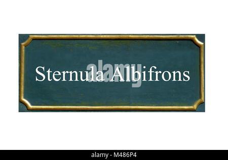 Peu de protection, Sterne Sterna albifrons, espèce animale menacée