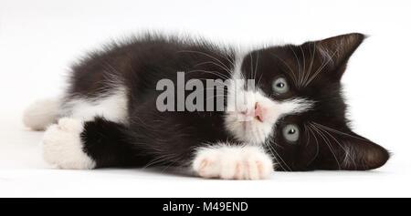 Le noir et blanc chaton, Solo, 7 semaines, allongé sur le côté. Banque D'Images
