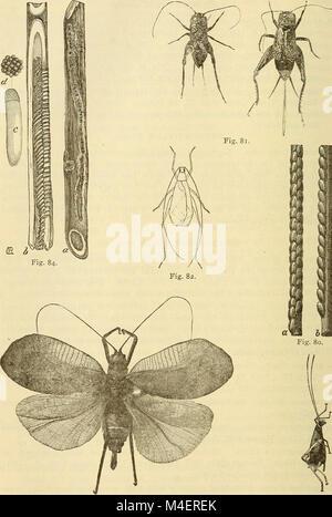Rapport annuel, y compris un rapport des insectes du New Jersey, 1909 (1910) (18243891640)