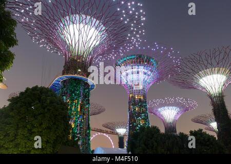Supertree grove dans les jardins de la baie de Singapour. Banque D'Images
