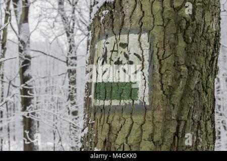 Le marquage de la route touristique. Route touristique d'un signe sur l'écorce d'un arbre. Forêt en hiver. Banque D'Images
