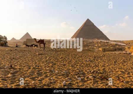 Chameaux devant les trois pyramides du complexe de Gizeh, Egypte, Afrique du Nord Banque D'Images