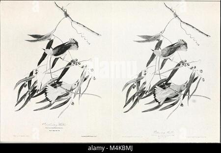 Audubon, le naturaliste; une histoire de sa vie et de l'heure ((c1917)) (19726620574)