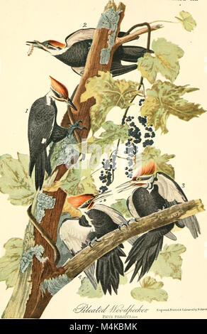 Audubon, le naturaliste; une histoire de sa vie et de l'heure ((c1917)) (19728049073)