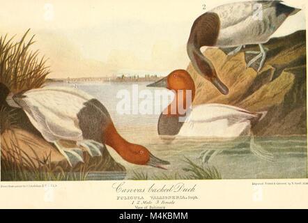 Audubon, le naturaliste; une histoire de sa vie et de l'heure ((c1917)) (20161029408)