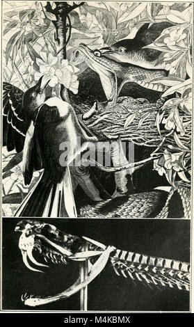 Audubon, le naturaliste; une histoire de sa vie et de l'heure ((c1917)) (20322763586)