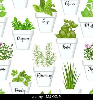 L'icône grand modèle transparent vector set d'herbes culinaires dans des pots blancs avec des étiquettes. De plus Banque D'Images