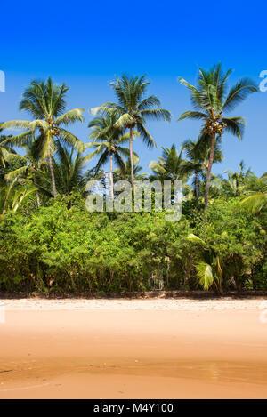 Cocotier vue en arborescence de la plage Banque D'Images