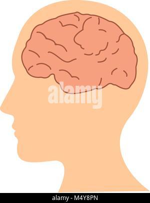 Modèle plat cerveau humain dans l'icône tête vector illustration Banque D'Images