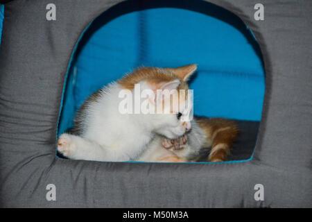 Un chaton blanc et gingembre dans un cat house Banque D'Images