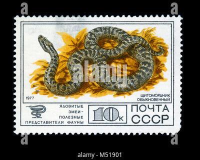 UKRAINE - circa 1977: un timbre imprimé en URSS montre Cottonmouth ordinaire, collection de faune protégée de l'URSS, Banque D'Images