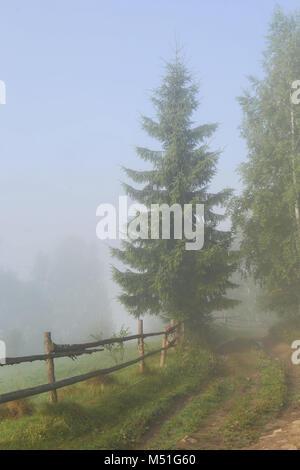 Epicéa, clôture, chemin, fleurs, bosses, à travers le brouillard, bouleau, village, champ, pré, le ciel du matin, Banque D'Images