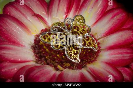 Papillon sur fleur de raine d'or Banque D'Images