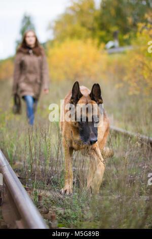 Attractive young woman walking avec son chien berger allemand à l'automne forêt, près de rail way - animal est au point
