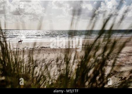 France, Normandie, Cotentin, Portbail, rider sur la plage vu de dune Banque D'Images
