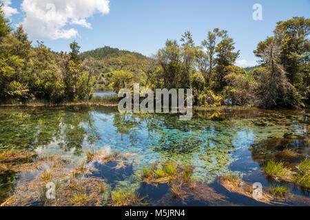 Te Waikoropupu Springs Takaka, karst, île du Sud, Nouvelle-Zélande, Pacifique Banque D'Images