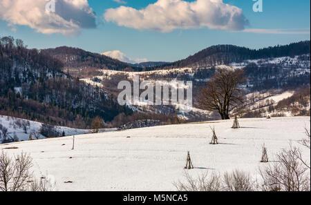 Lonely tree sur snowy hillside. beaux paysages d'hiver dans la région rurale de montagne Banque D'Images