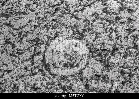 L'empreinte d'une grande ammonite fossilisée anciens escargots sur une dalle de pierre pavés. La texture. L'arrière Banque D'Images